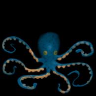 3d model - Frist octopus