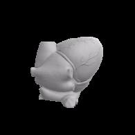 3d model - Human Heart