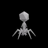 3d model - Bacteriophage T4