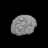 3d model - brain